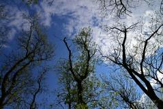 Susan Guy_Lyveden_Garden_tree tops_17.05.16_2 c